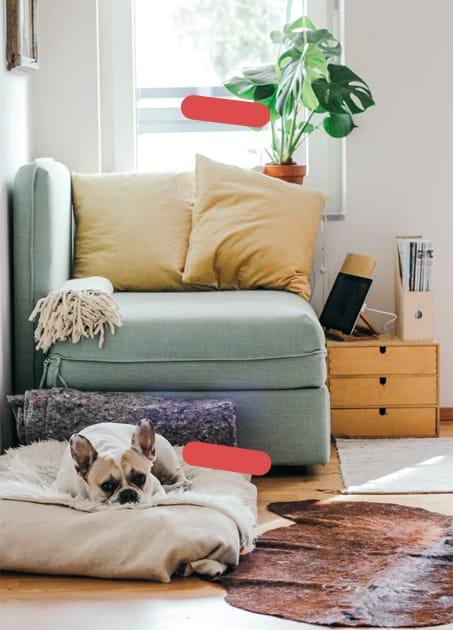 Dog laying on floor cushion